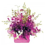 Boxed Arrangement of Singapore Orchids